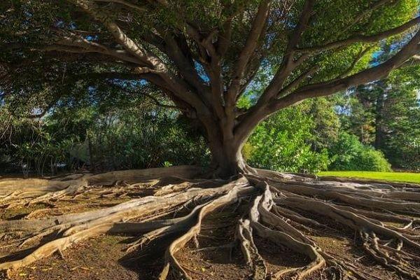 Le radici: un tesoro da cui attingere tutta la vita